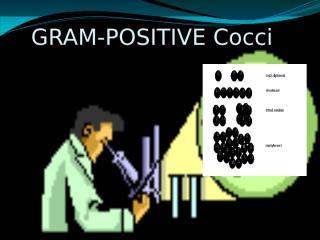 4-Gram positive cocci.pptx