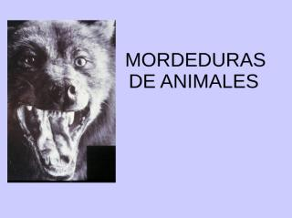 MordeduraAnimalesU2.ppt