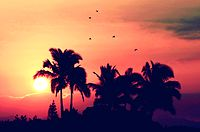 paradise.png